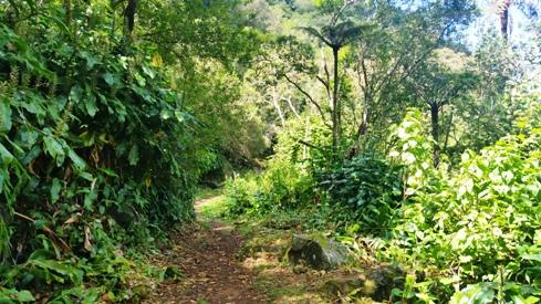 Sentier vers Bras Patate