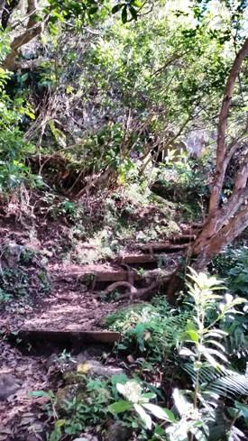 Sentier vers Piton Cabris
