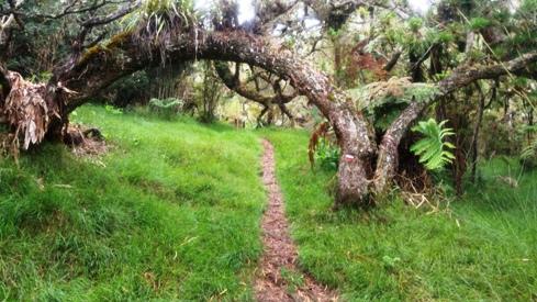 Forêt Roche Ecrite