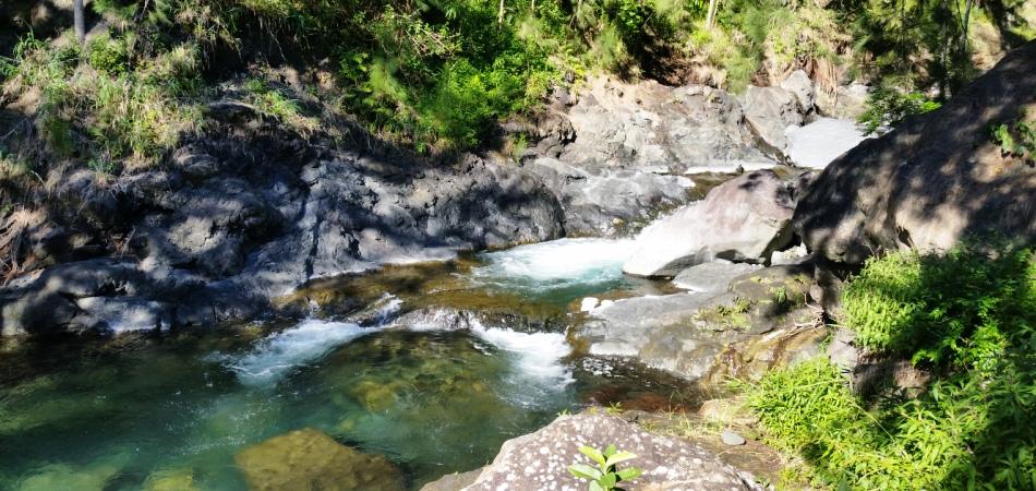 Rivière Fleurs Jaunes