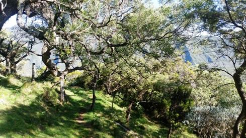 Sentier bordé par des tamarins des hauts