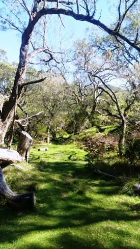 Sentier dans forêt de tamarins des hauts